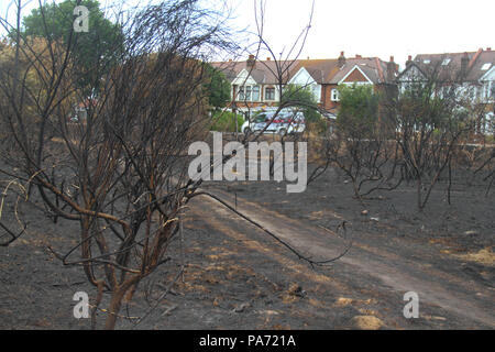 Wansted Flats, UK: 20 July 2018: Local traffic on Central Road on20 July, as seen from the churred Wanstead flats, the scene of the July 15th fire where around the area of 100 football pitches was burnt on the tinder-dry flats. 225 firefighters and 40 fire engines tackled the blaze in what has been described as the largest grass fire ever seen in the capital. Credit: David Mbiyu/ Alamy Live News - Stock Image
