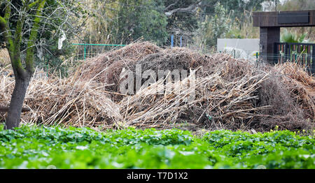 Bunch of dry branch sheaves on a rural farmland - Stock Image
