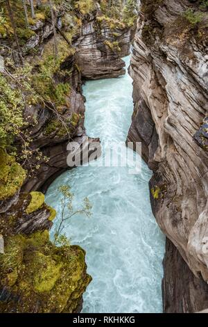 Turquoise water flows through a gorge, Athabasca Gorge, Athabasca River, Jasper National Park, back mountains, evening mood - Stock Image