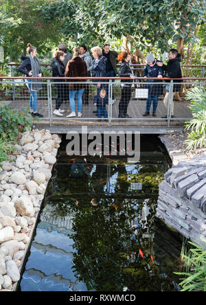 Large group of people on a footbridge with a toddler looking at goldfish in the pond below. - Stock Image