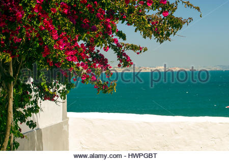 Bougainvillea by the sea in Portugal. - Stock Image