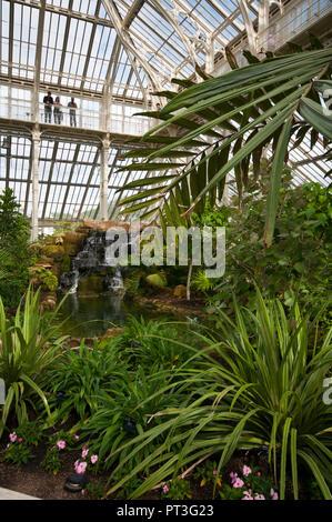 Inside The Temperate House in The Royal Botanic Gardens Kew Gardens London England UK - Stock Image