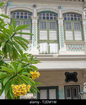 Frangipani tree in garden of Colourful Peranakan terraced houses popular with instagrammers on Koon Seng Road, Joo Chiat,  Geylang, Singapore. - Stock Image