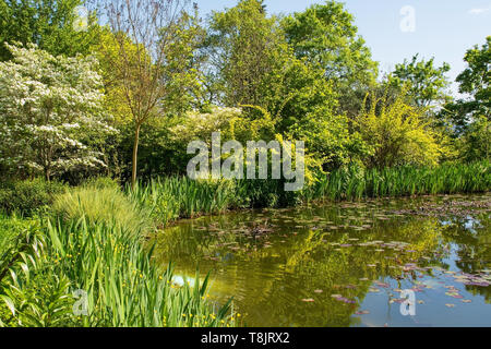 A pond in a park in the north eastern Friuli Venezia Giulia region of Italy in spring - Stock Image
