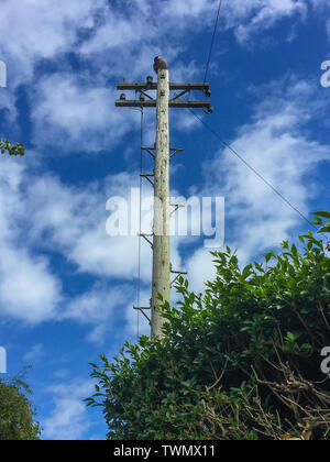 Pigeon sitting on top of a telegraph pole - Stock Image