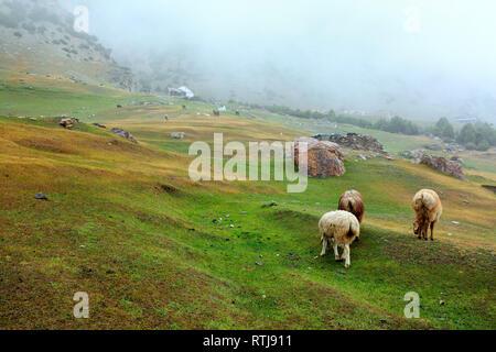 Kizilsu glacier park, Oytagh valley, Kizilsu Prefecture, Xinjiang Uyghur Autonomous Region, China - Stock Image