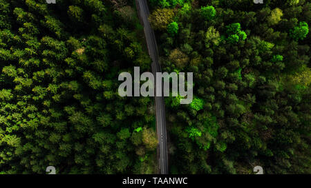 Straight road on green pine forest, aerial drone top down view. - Stock Image