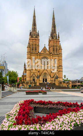 St Mary's Cathedral is the cathedral church of the Roman Catholic Archdiocese of Sydney, New South Wales, Australia. - Stock Image
