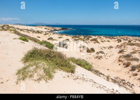 Corralejo dunes natural park, dunes on the island of Fuerteventura, canary islands - Stock Image