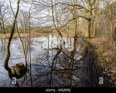 Flooded path along river Lachte, seen from bicycle, Celle, Germany - Stock Image