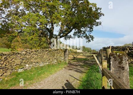Dalesway near Bowness on Windermere Cumbria England UK United Kingdom GB Great Britain - Stock Image