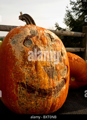 old pumpkin at country farm stand - Stock Image