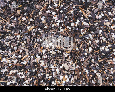 seashells and small wooden pieces washed out on the beach shore - Stock Image