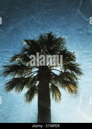 Palm tree with grunge effect - Stock Image