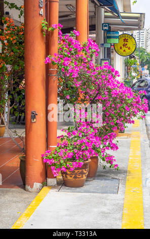 Flowering pot plants on the pavement outside of dwelling in Singapore - Stock Image