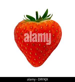 Upright single lone Strawberry without shine isolated against a white background. - Stock Image