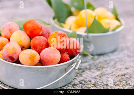 small plums, yellow and pink - Stock Image