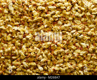Gassed male chicks - Stock Image