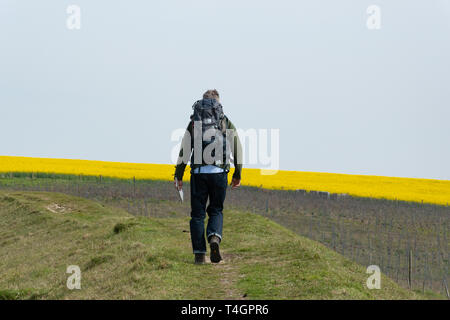 Male walker walking around the Iron Age Hill Fort at Old Winchester Hill in the South Downs National Park, Hampshire, UK, in April - Stock Image