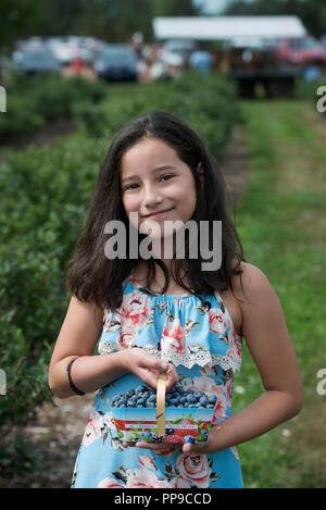 11 year old girl holding lowbush blueberries that she picked at a u-pick blueberry farm in Levis, Quebec, Canada. - Stock Image