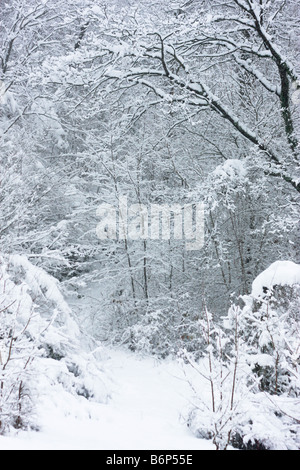winter woodlands magic in Le Marche,Italy - Stock Image