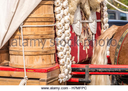 Sale of fresh garlic hanging from a horse cart - Stock Image