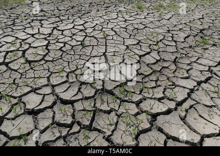 Cracked dry land. Drought, waterlessness. Disaster. Small plants thirst for rain. - Stock Image