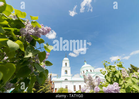 A view on the church between of the branches of lilac, bottom view - Stock Image