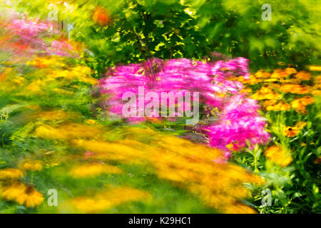 Phlox and other summer flowers blowing in the wind in a garden, Clitheroe, UK. - Stock Image