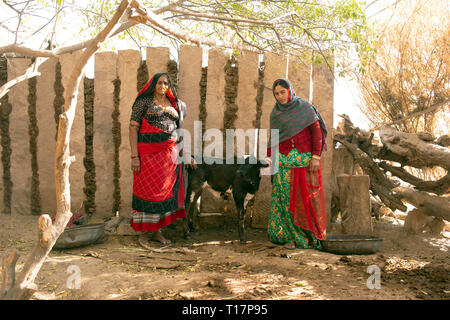 Bishnoi women pose with their cow. The Bishnoi are a vegetarian religios sect in India. - Stock Image