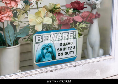 'Beware! Guard Shih Tzu on duty', sign in window, with plastic flowers in the background - Stock Image