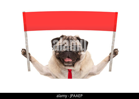 business pug dog with tie and reading glasses, holding up red banner sign, isolated on white background - Stock Image