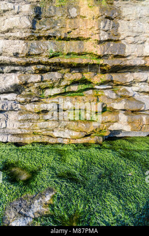 Seaweed at the base of the cliffs at Dunraven Bay in Southerndown, South Wales. - Stock Image