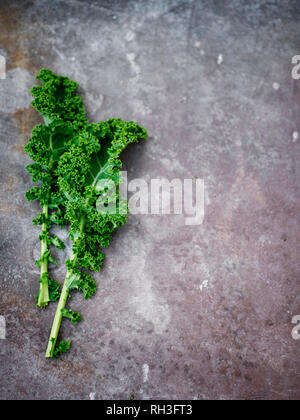 Kale leaves on grey background - Stock Image