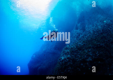 young female diver swimming underwater along a steep limestone cliff against a deep blue sea - Stock Image
