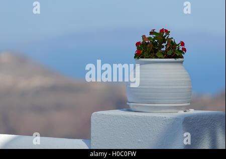 Flowers at Santorini - Stock Image