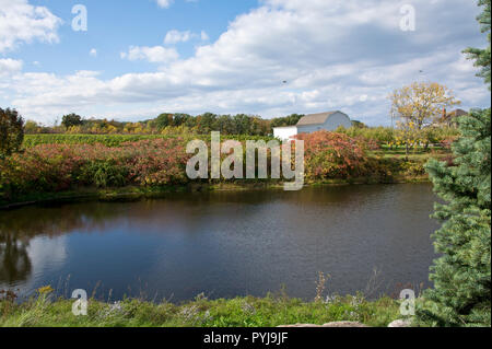 Picturesque pond and vineyards in Beamsville, Ontario,  Canada in the Niagara Peninsula, in the Autumn. - Stock Image