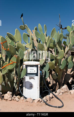 An old gas pump stands among a cactus at the Solitaire gas station, restaurant and general store, on the road to the dunes at Sossusvlei in the Namib- - Stock Image