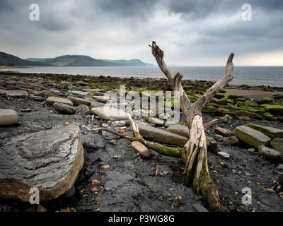 The Jurassic Coast between Lyme Regis and Charmouth, Dorset, England - Stock Image