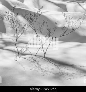 Plant Branches in Snow with Shadows - Stock Image