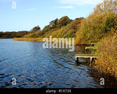 Autumn colours and fishing platforms in the reed beds of Rollesby Broad, part of the Trinity Broads nature conservation area in Norfolk. - Stock Image