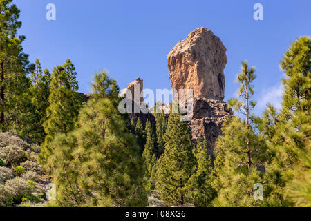 Roque Nublo volcanic plug and cloud pines, Gran Canaria, Canary Islands - Stock Image