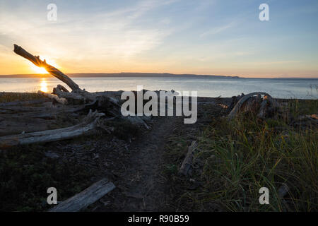 A trail to the salt water beach at sunrise at a beach on the north west coastline of the USA. - Stock Image