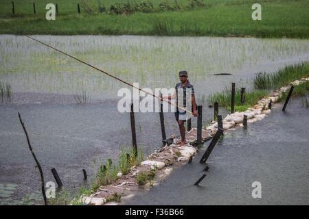 Man fishing in rice paddies in central Myanmar. - Stock Image
