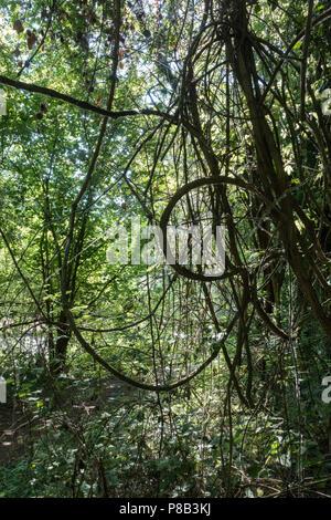 Natural tree art - Stock Image