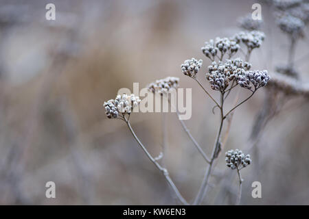 Winter seed headin a wintry Swedish forest. - Stock Image