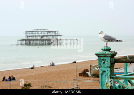A seagull perched on metal rail at the beach in Brighton, with derelict burnt West Pier in the background. - Stock Image