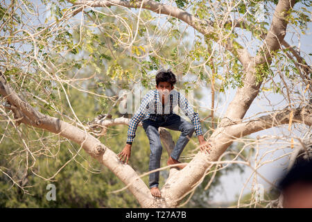 A young Bhil tribe boy climbing a tree in his small, rural village in Rajasthan, India. - Stock Image