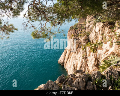 Rocky sea coastline with pine trees background on sunny summer day - Stock Image