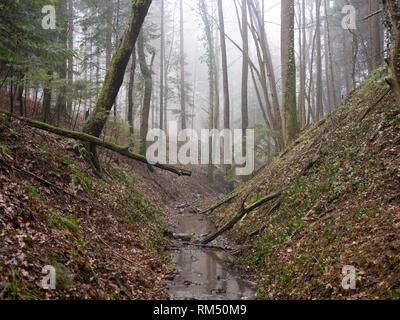 Creek in forest - Stock Image